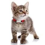 Ошейники, шлеи и поводки для котов